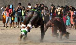 Lutadores de diversas aldeias se preparam para o Huka-huka. Huka-huka Luta corporal que na terminologia kamaiurá lembra os gritos dos lutadores ao se defrontarem imitando o rugido da onça. Os anfitriões enfrentam uma aldeia convidada de cada vez, começando por lutas individuais de campeıes reconhecidos. Seguem-se lutas simultâneas de vários pares de rivais, até as lutas dos muito jovens. Os lutadores se defrontam batendo o pé direito no chão, dando voltas no sentido dos ponteiros do relógio, com o braço esquerdo estendido e o direito retraído, enquanto gritam alternadamente: hu! ha! hu! ha! Até que chocam as mãos direitas e enlaçam o pescoço do adversário com a esquerda. A luta, que pode durar poucos segundos, termina quando um dos adversários é derrubado, o que não tem que ocorrer literalmente, bastando que a parte posterior de um de seus joelhos seja agarrada pela mão do outro, o que é considerado condição suficiente para provocar-lhe a queda. As aldeias convidadas não lutam entre si. Os enfeites dos troncos do Kwarup podem ser dados aos lutadores vencedores e também aos dois tocadores de maracá.. Querência, Mato Grosso, Brasil. 26/07/2015 Fonte: ISA