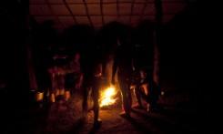 """Cerimônia do Kwarup na aldeia Kamaiurá, no Parque indígena Xingu. O Kwarup (nome do ritual na língua kamaiurá) é considerado o grande emblema do Alto Xingu e trata-se de uma cerimônia funerária, que envolve mitos de criação da humanidade, a classificação hierárquica nos grupos, a iniciação das jovens e as relações entre as aldeias. Ao longo dos meses que se seguem até o encerramento ocorrem, não necessariamente todos os dias, dois tipos de danças e o toque de longas flautas (uruá, na língua dos Kamaiurá), sempre retribuídos com oferecimento de alimentos pelos """"donos"""" do Kwarup. O foco de orientação dessas atividades rituais é sempre a cerca sobre a sepultura. No pátio da aldeia promotora do rito, cada falecido homenageado é representado por uma seção de tronco de cerca de dois metros. São de uma espécie vegetal que tem distintas denominações conforme as diferentes línguas xinguanas. Os Kamaiurá a chamam de Kwarup, a mesma madeira com que o herói mítico fez as mulheres que enviou para se casarem com o jaguar. Os troncos são colocados um ao lado do outro, de pé, embutidos em buracos de 50 cm de fundo. São pintados e ornamentados com adornos plumários e cintos masculinos. A única distinção entre os troncos que representam homens e os que representam mulheres é que os primeiros são guarnecidos com mechas de algodão não fiado. Também os homens comuns falecidos têm direito a ser representados por troncos, porém menos grossos e com ornamentação mais simples. Os espíritos dos mortos homenageados ficam junto aos troncos na última noite do rito e a isto se reduz a sua participação. Ao anoitecer, acendem-se fogueiras diante de cada tronco do Kwarup. Enquanto os moradores da aldeia anfitriã se revezam, velando os troncos e chorando os falecidos homenageados, os visitantes, cada acampamento por sua vez, entram na aldeia trazendo achas de pindaíba para remanejar as fogueiras, numa cena movimentada e tensa. Fonte: I"""